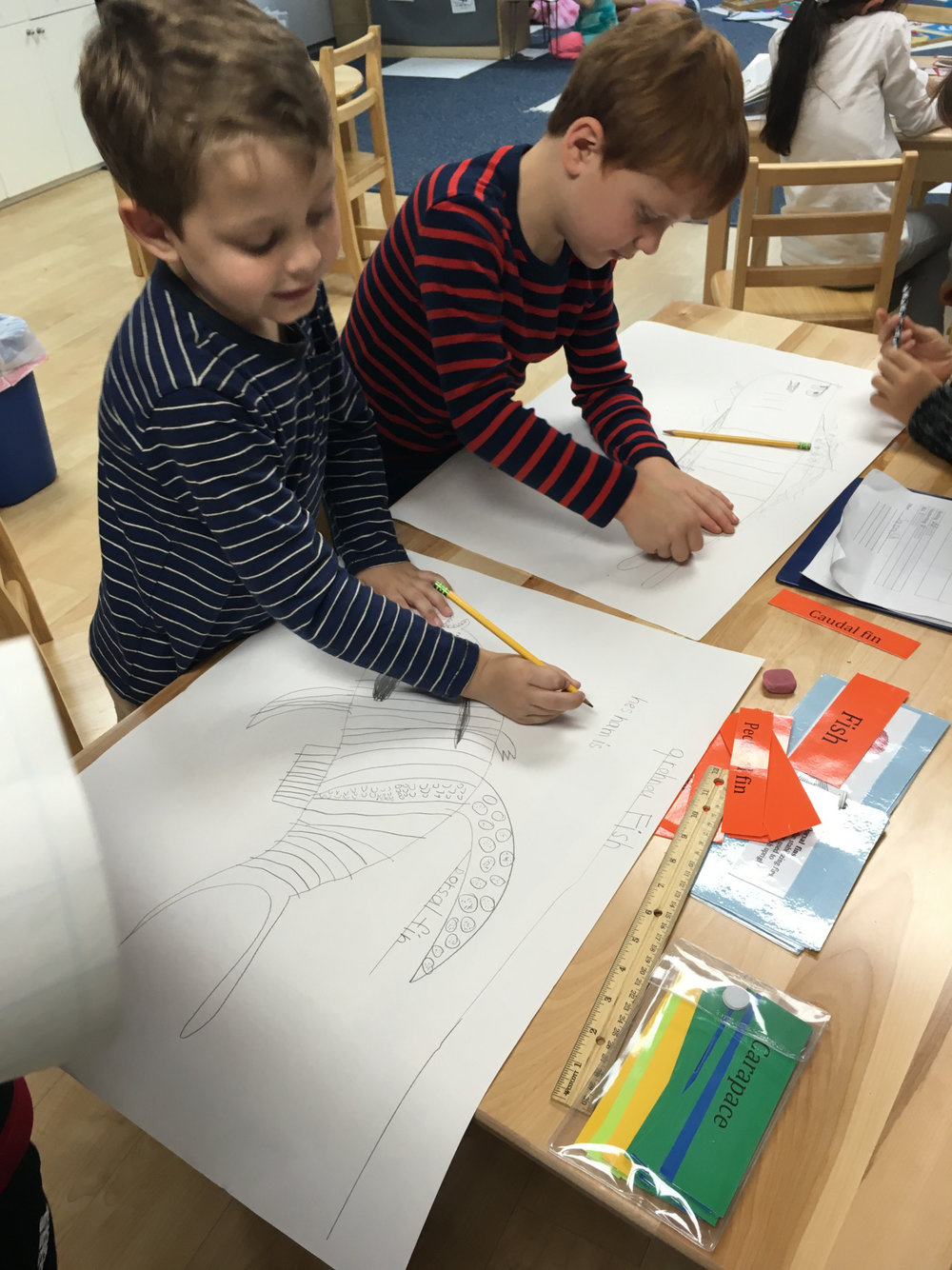 As part of their Zoology curriculum, the Lower Elementary West first grade students received a lesson about parts of fish.  The students recorded and labeled the fish parts on poster board and then had the option to color or paint their finished product.