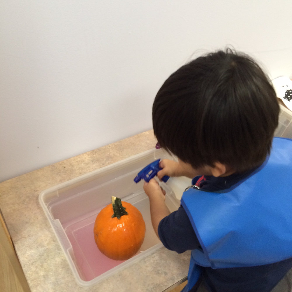 In the Toddler 1 class, a Practical Life challenge:  How do you get water out of a spray bottle?