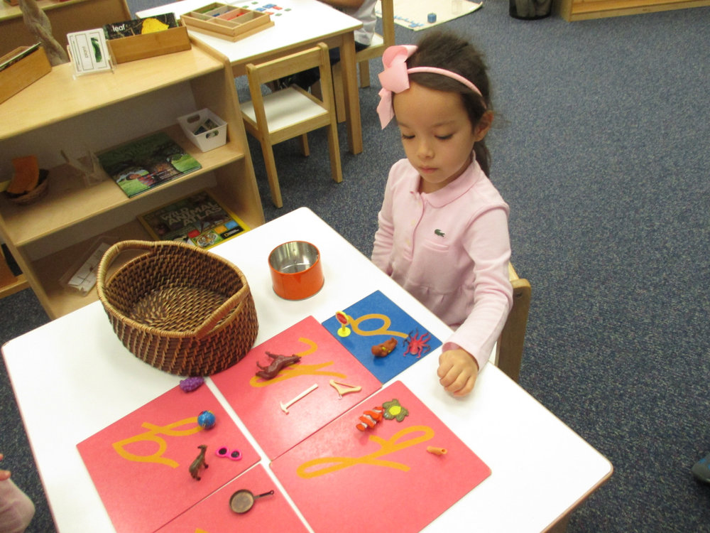 Learning the sounds of the letters and associating them with objects as preparation for reading was one of Dr. Montessori's brilliant lessons. Primary 1 students work on letter sounds in a variety ways, repeating their work until they master the sounds.