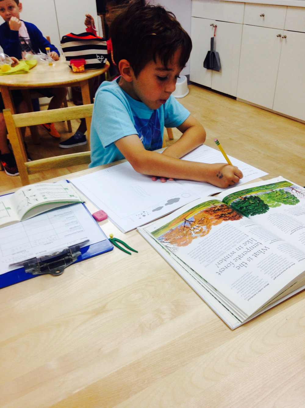 The Montessori classroom fosters independent research.  A Lower Elementary West student chose to conduct research to learn about different types of leaf shapes.