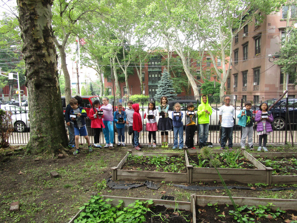 The Lower Elementary North students took a walk to the Community Garden to transplant the seeds they planted in the classroom into the garden for the summer months.