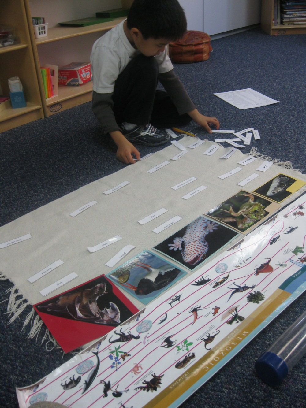 A Lower Elementary West student reviewed the vital functions of each class of vertebrate by laying out the information as a chart.
