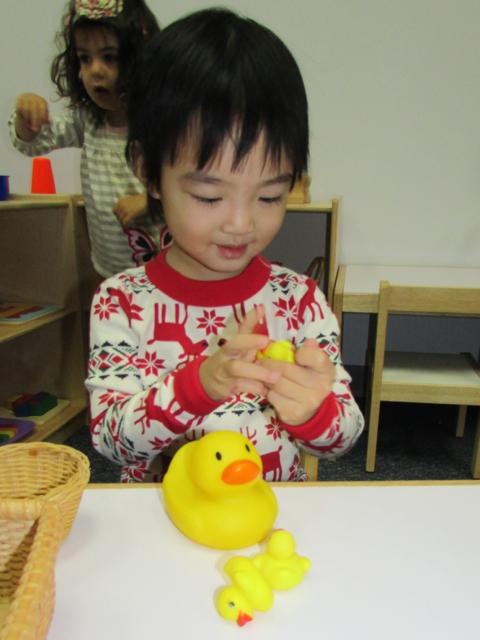 T2 ducks 2.jpg