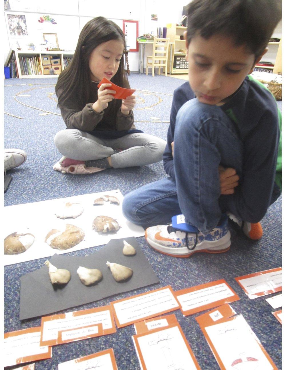 3rd Graders- Parts of Mushroom.jpeg
