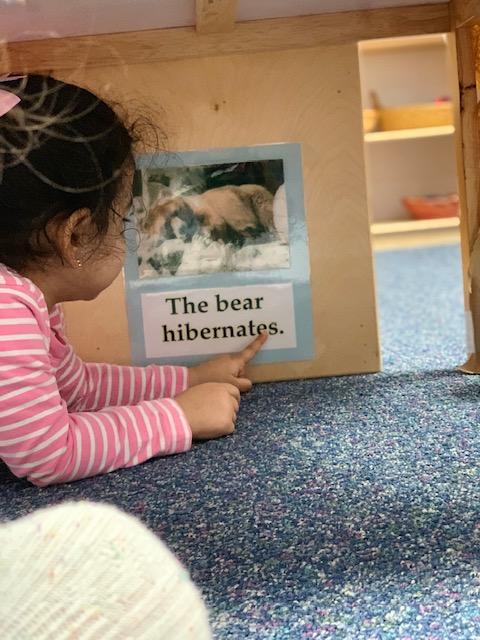 T2 bear 5.jpg