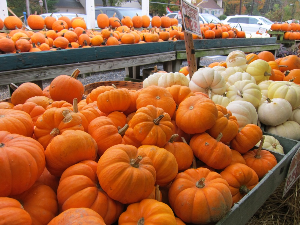 Pumpkin Fall Produce