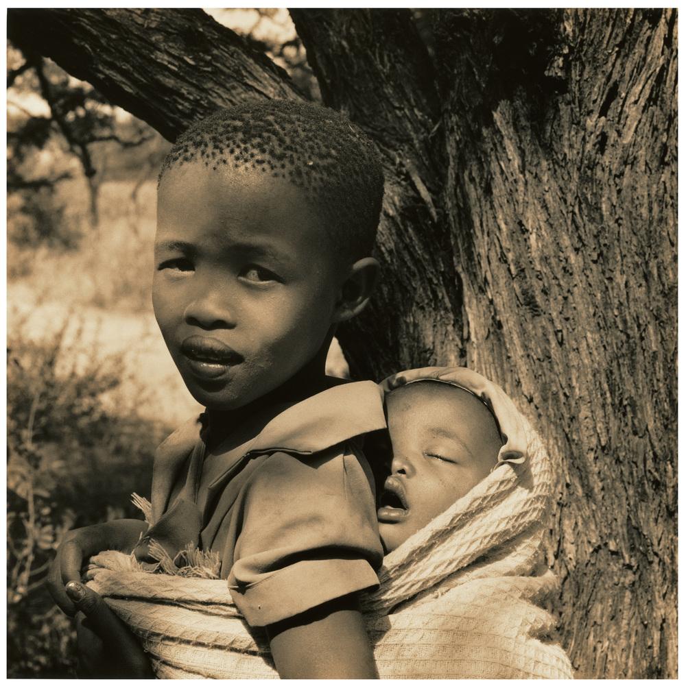 Bushbabies , Central Kalahari Desert.