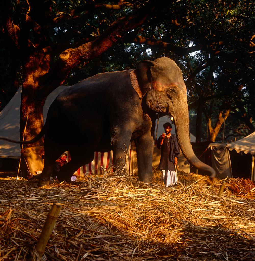 Sonnepur Mela, Bihar