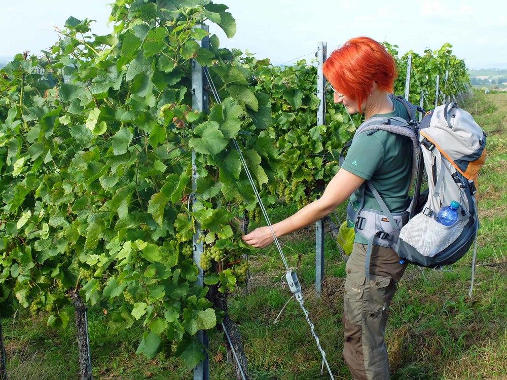 wo winzer verwöhnen - Der badische Weinwanderweg