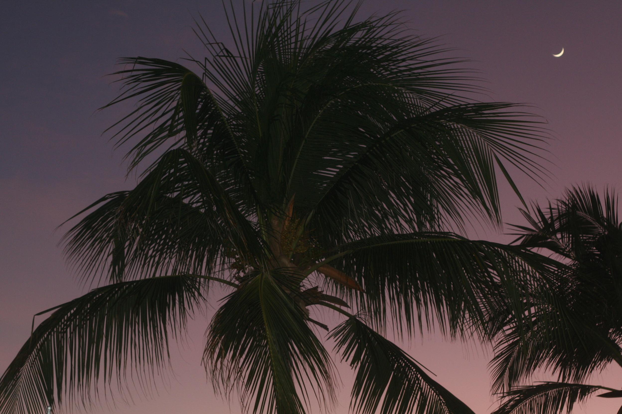 Barbados 335