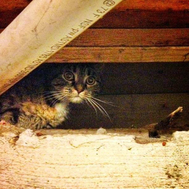 Cat in the wall? Now you're speakin my language. #alwayssunny #charliekelly #biscuitversusrebel