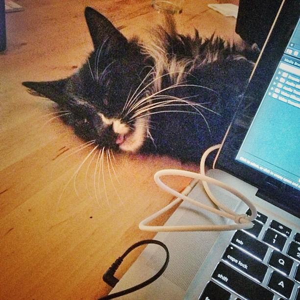 Mr Beast - Assistant Editor for @rivercityleather (at Las Fram (what happens in Fram stays in Fram))