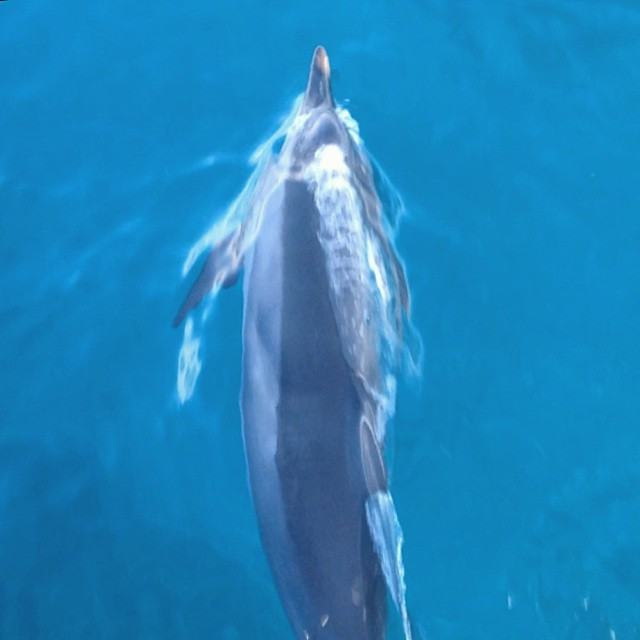 Do you like swimming? Dolphinitely. (at Honokohau Harbor)