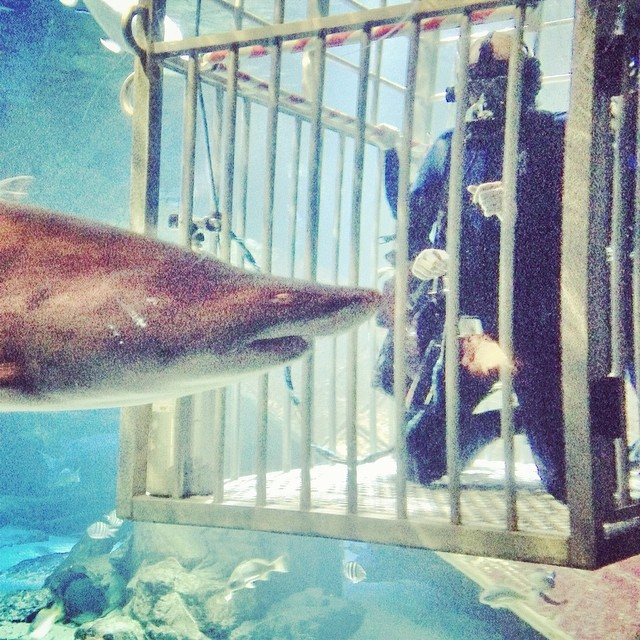 Shark boxing. Put'em up put'em up.  (at Long Island Aquarium & Exhibition Center (Atlantis Marine World))