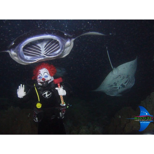 Happy Halloween! Check out the Manta Ray Advocates blog for the full video. (at Kona District, Hawaii)   http://www.mantarayshawaii.com/_blog/Manta_Rays_in_Kona_Hawaii/post/happy-halloween-2014/