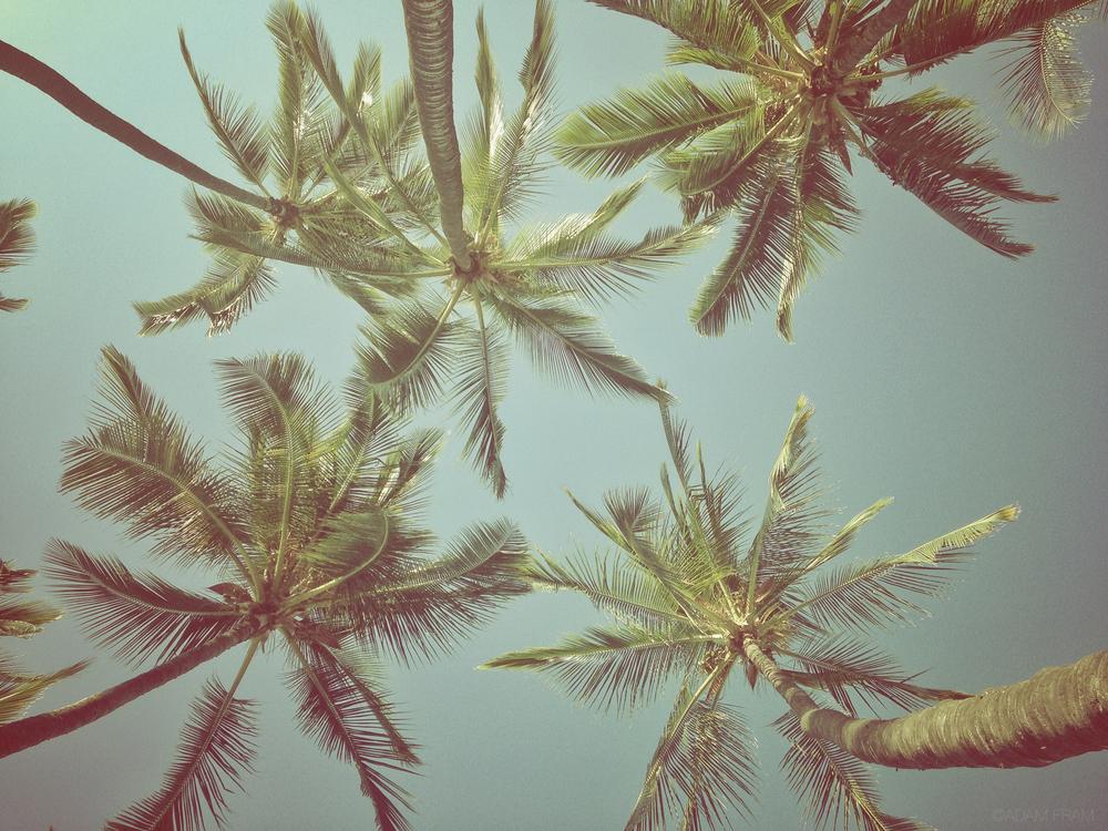 KekahaKai_palmtrees.jpg