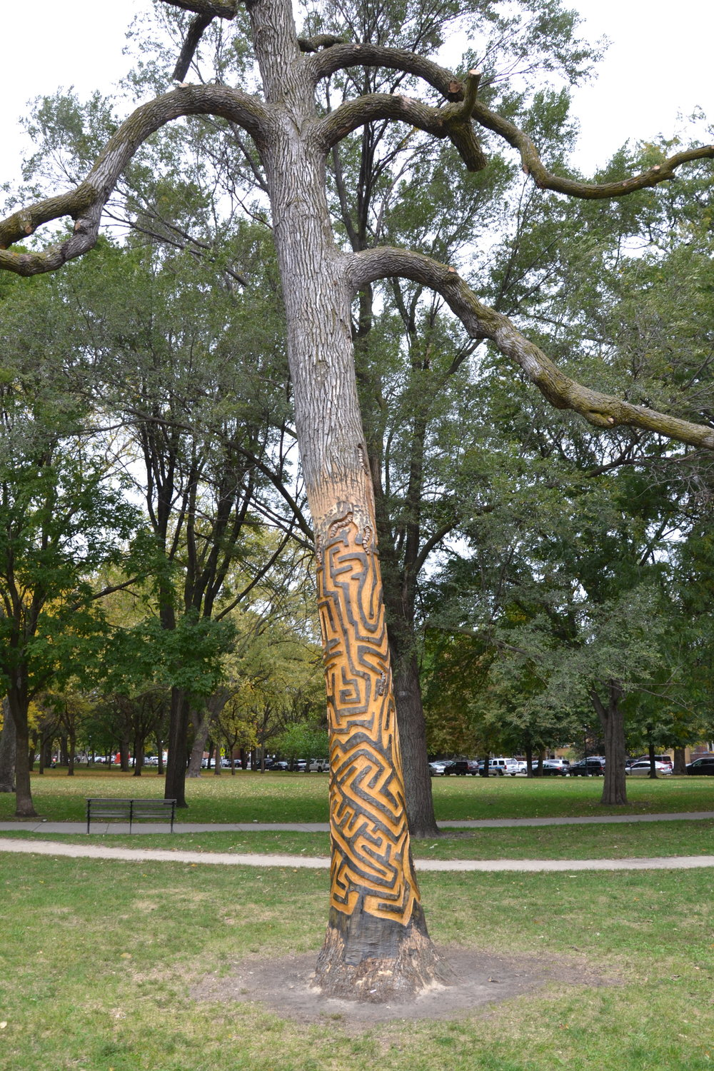 The A%22MAZE%22ing Emerald Ash Borer.JPG