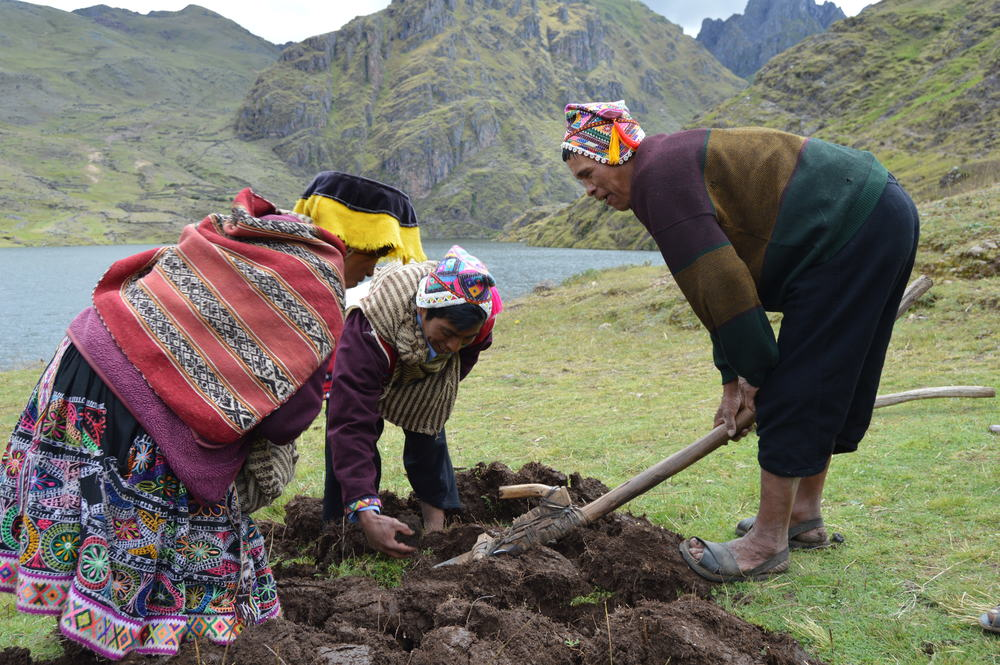 Demonstration of ancestral agricultural techniques at Paru Paru Community near Cusco, Peru