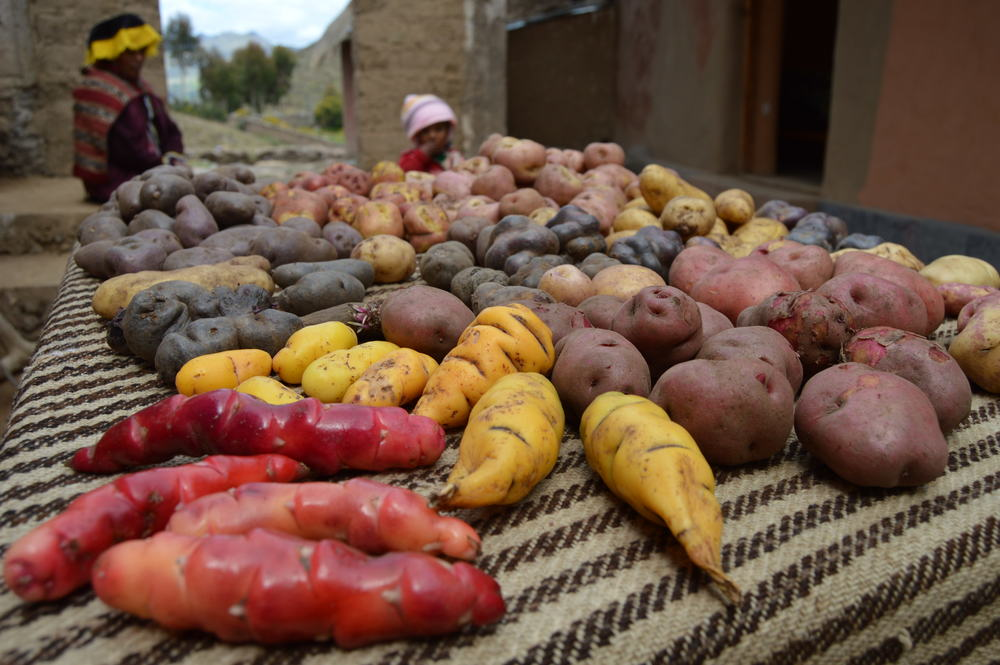 Tubers demonstration at Paru Paru Community near Cusco, Peru