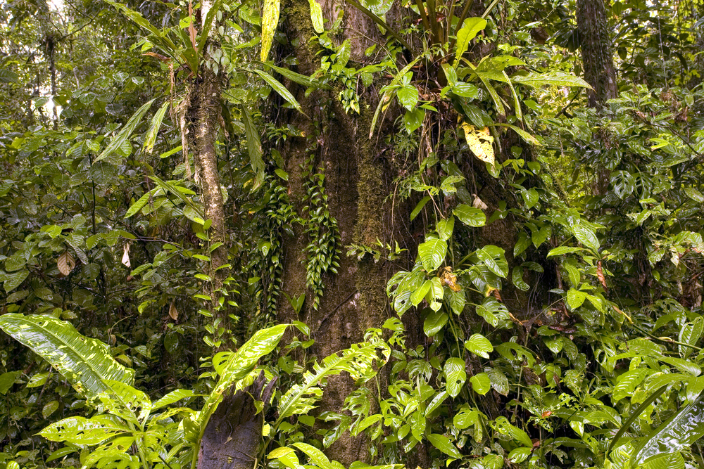 Interior of tropical rainforest in Ecuador shutterstock_85039771.jpg