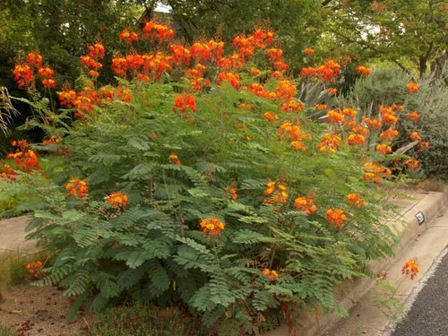 Pride Of Barbados Project Transitions