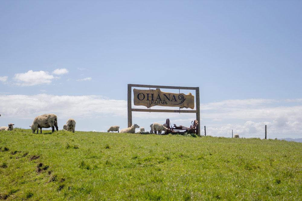 NewZealand-8698.jpg