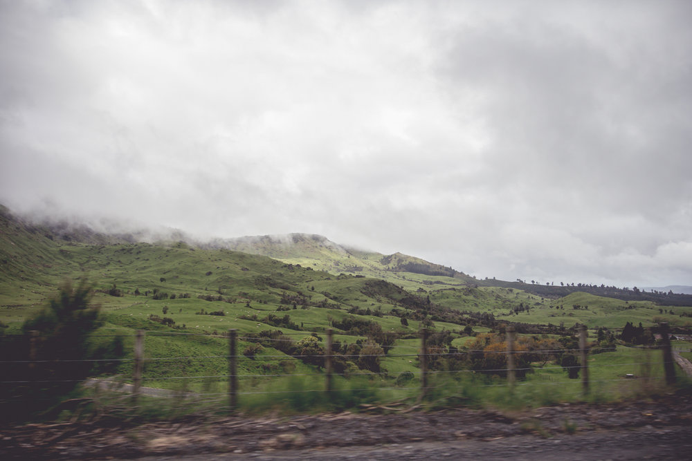 NewZealand-9080.jpg
