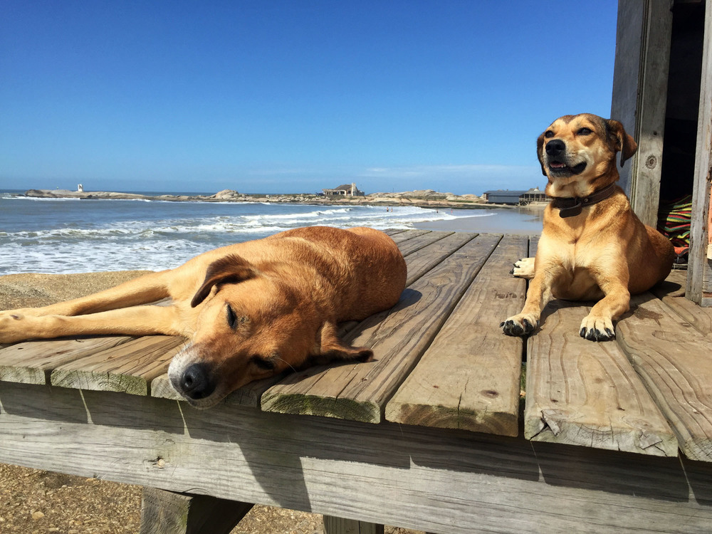 Beach/street dogs on the lifeguard stand