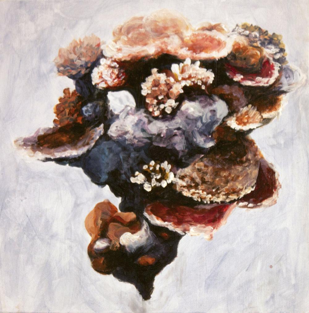 No. 23 (Coral island)