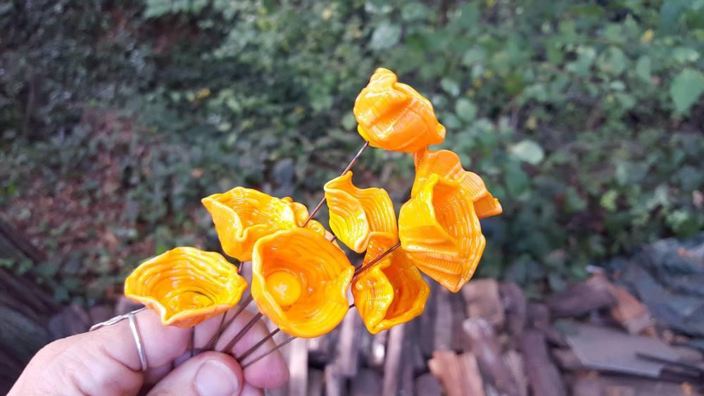California golden poppies!