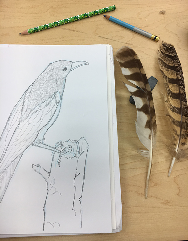 bird drawing sketchbook feathers