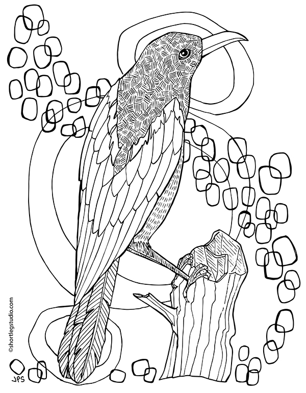 New Magpie Coloring Page Short Leg Studio