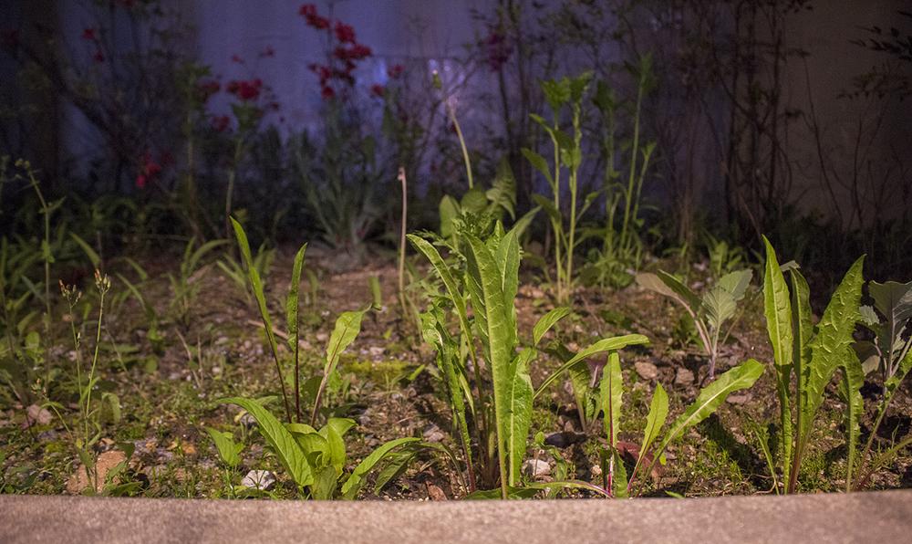 the space also has a small backyard garden