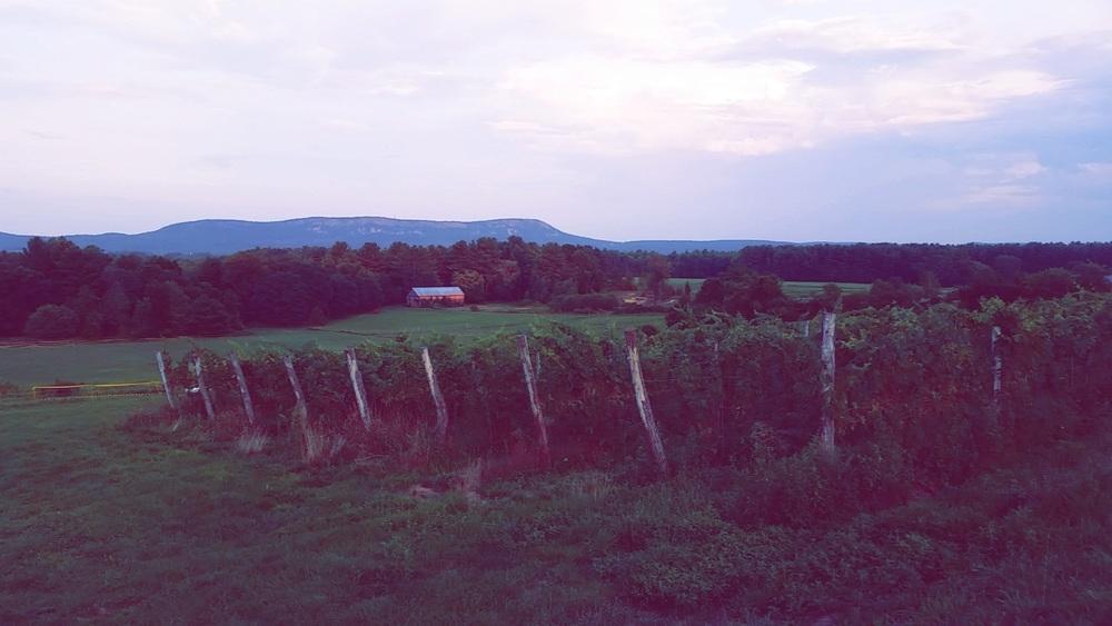 Black Birch Vineyard