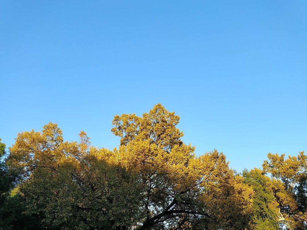 Fall Days 2.jpg
