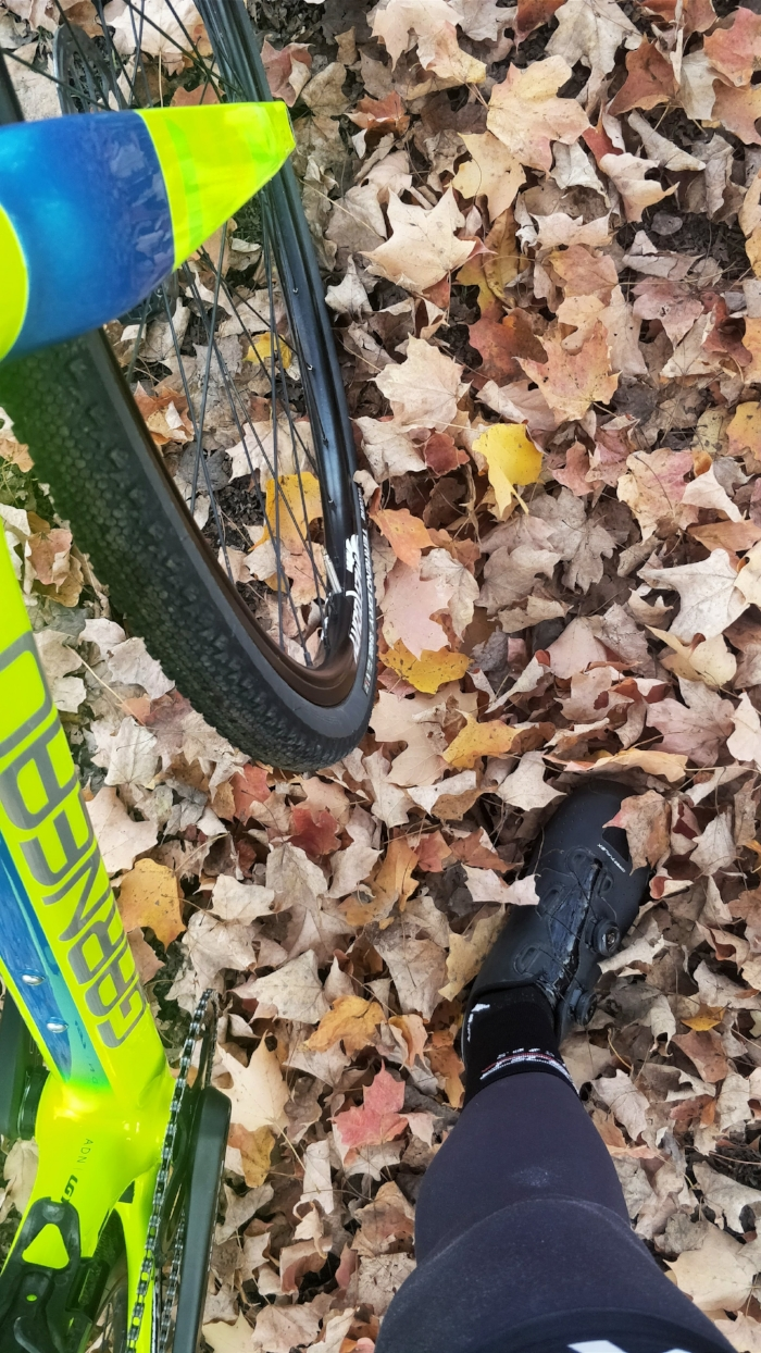 Finally found Fall!!