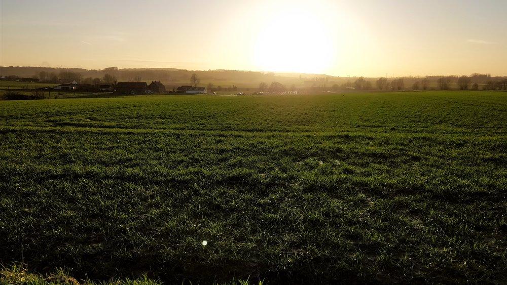 Some of Flanders fields.