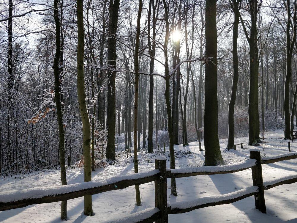 winter sunshine.
