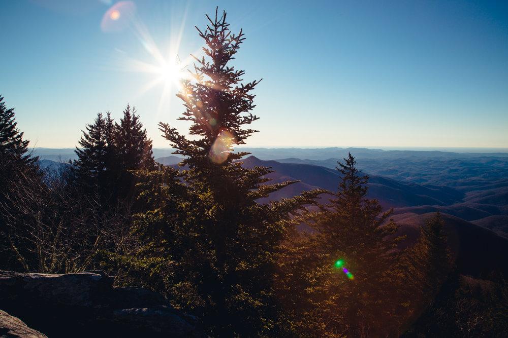 pine-trees-eastern-us