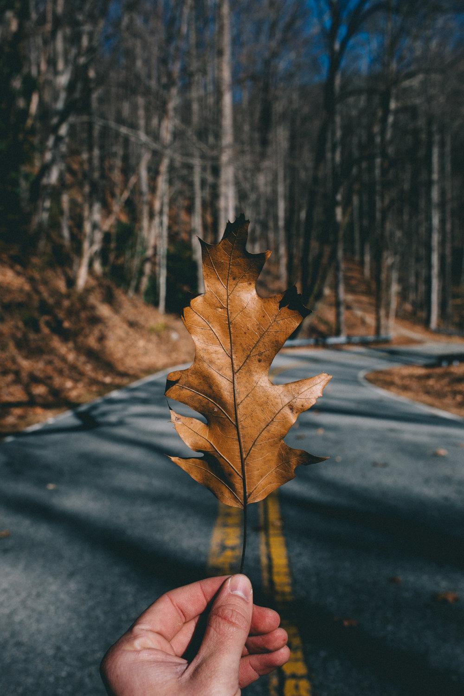 Throwing-leaf