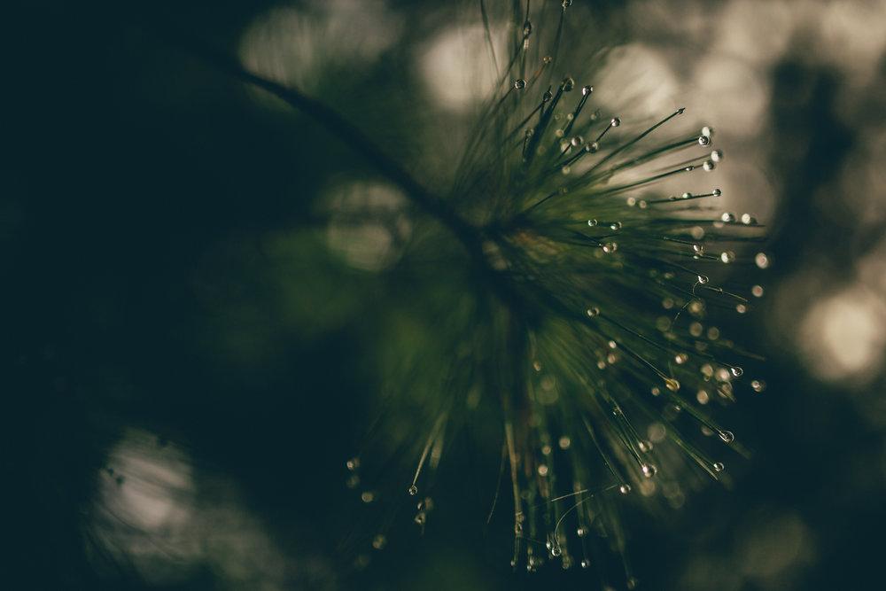 forest-cincinnati-nature-photography