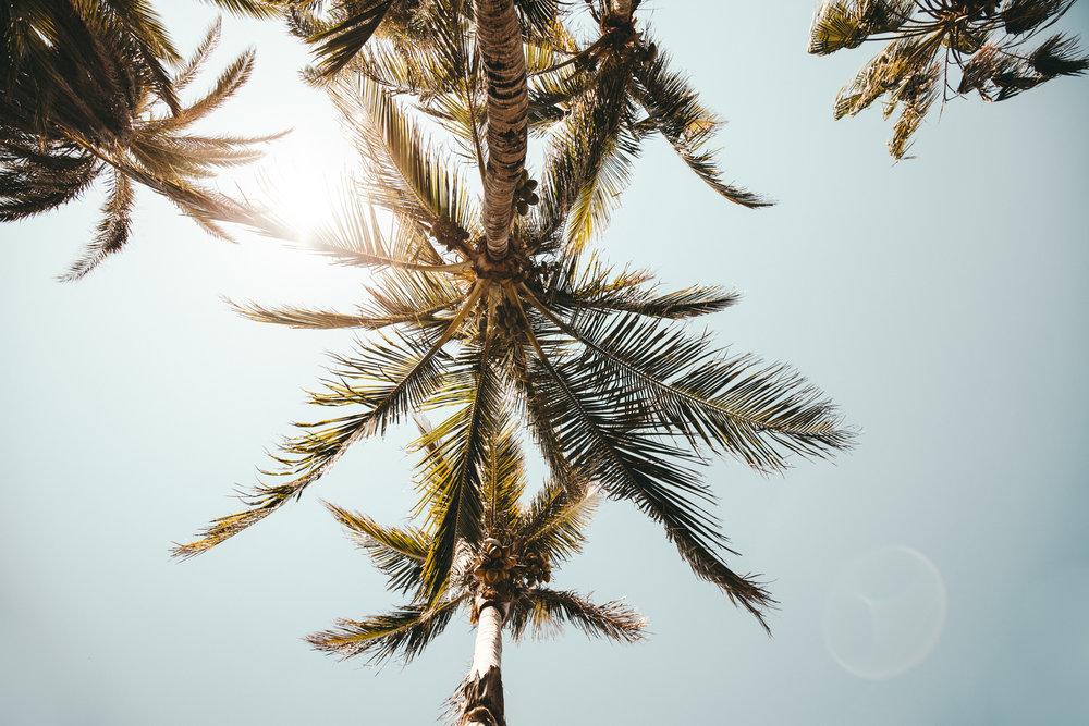 orlando-photographer-photography-videographer-kal visuals-florida-ecoboardin-ecoboarding