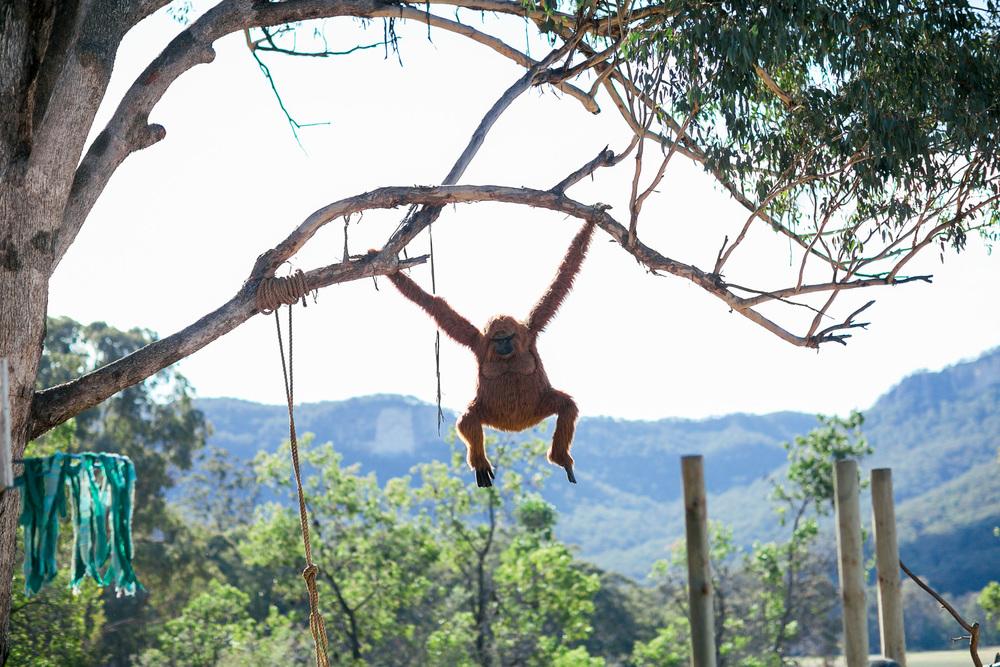 VOENA_PSYFARI_FESTIVAL_BUSH_DOOF_CAMPING_2015_AUSTRALIA-12.jpg