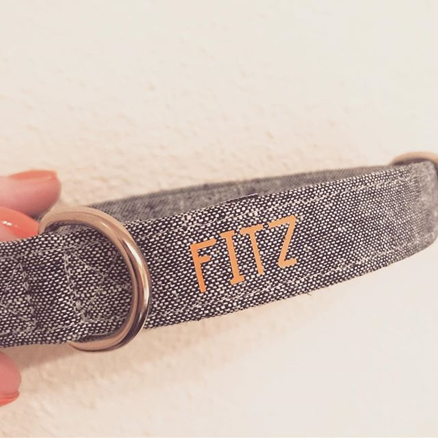 Fitz is getting a new collar!! Orange on Chambray = Meant to Be!!