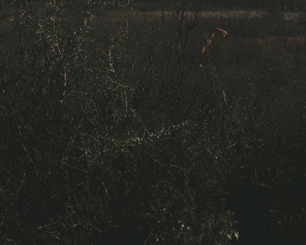 dark bush.jpg
