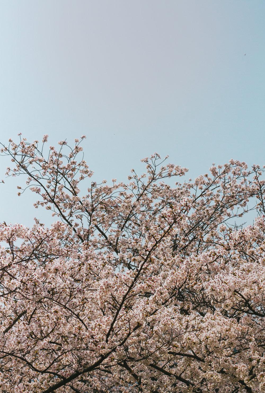 Adachi Park | Kitakyushu | 2018