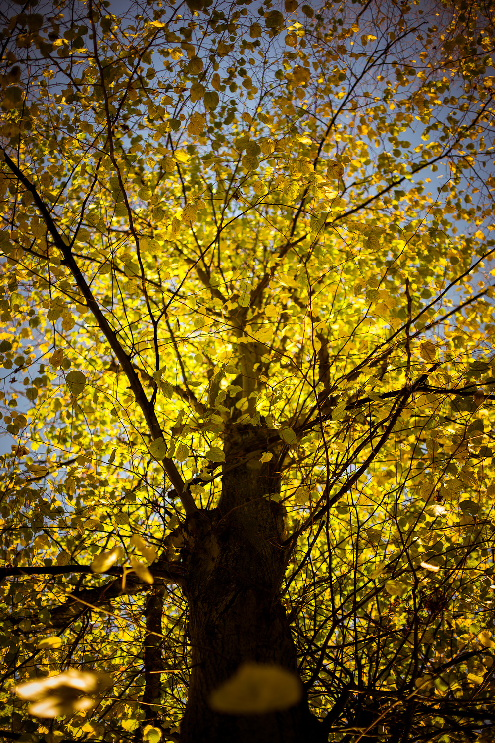 Hampstead Autumn 05.jpg