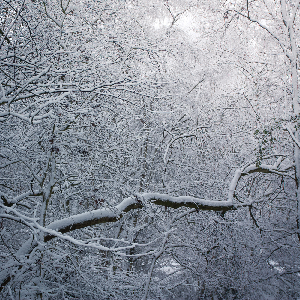 Hampstead Heath Snow 20120205-7.jpg