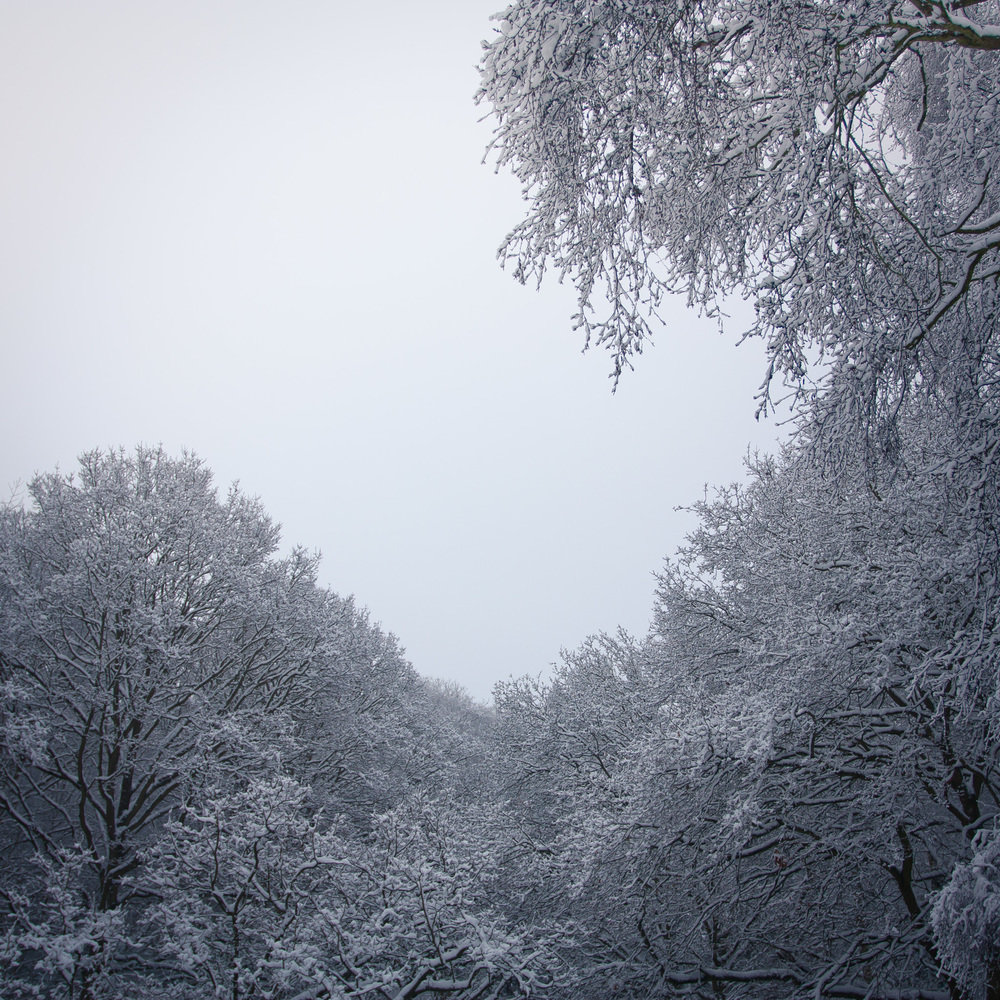 Hampstead Heath Snow 20120205-8.jpg