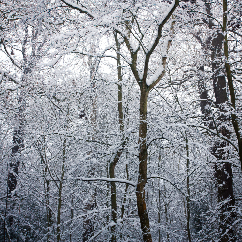 Hampstead Heath Snow 20120205-9.jpg